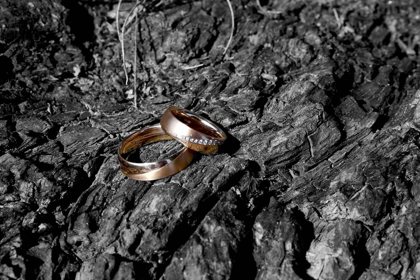 Hochzeitsringe auf Rinde
